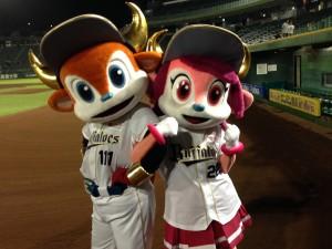 今季ほっと神戸でブルベルが見られるのはこれがラスト!